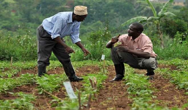 Agriculture revolution in Niger Delta
