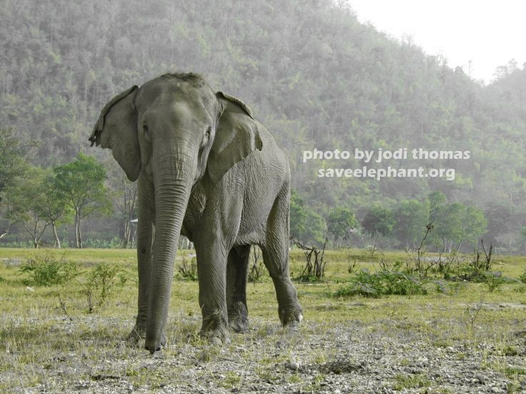 Elephant Rumblings: Potentially a Gray Day Indeed