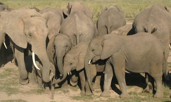 Elephant Rumblings: Transactions but no Trades