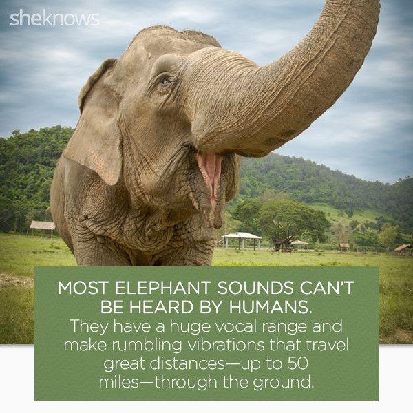 Elephant Rumblings: Yankees Soured On Doolittle