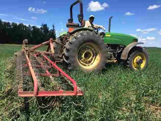 Zapping Noxious Weeds On Organic Farms Is Harder Than You Think