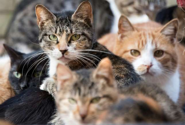 Stray cat a suspect in attempted murder In Japan