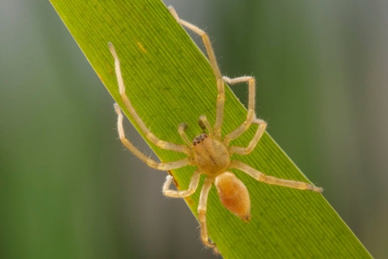Spider scare sends federal government workers home — twice
