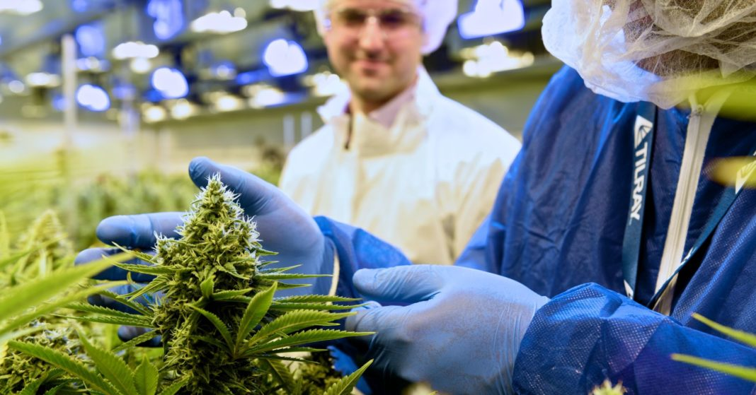 Marijuana grower Tilray strikes deal to develop cannabis-infused makeup, foot creams, other products