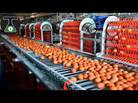 Video: Food Industry Machines That Are At Another Level