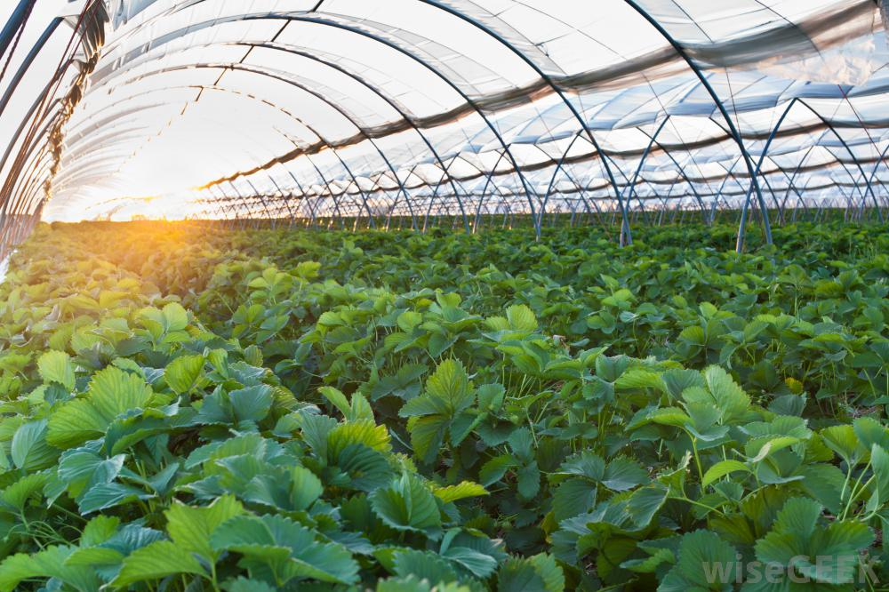 Steps to Follow To Get - Organic Greenhouse Farming Business Plan