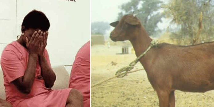 Woman Sentence To Six Months Jail Term For Stealing A Goat To Pay Son's Medical Bill