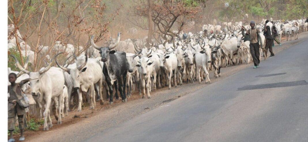 Nigeria news : Why Fulani herdsmen don't need visa to enter Nigeria – Miyetti Allah