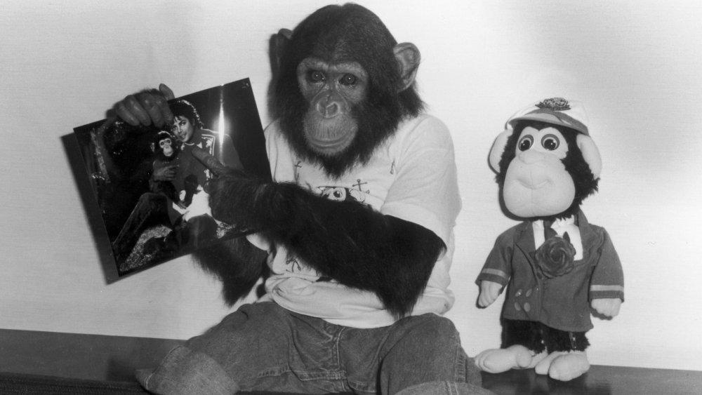 Whatever happened to Michael Jackson's pet chimp Bubbles?