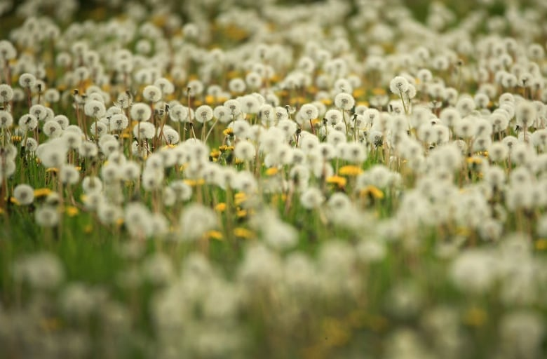 Weeds get a bad rap, but many are crucial to the ecosystem