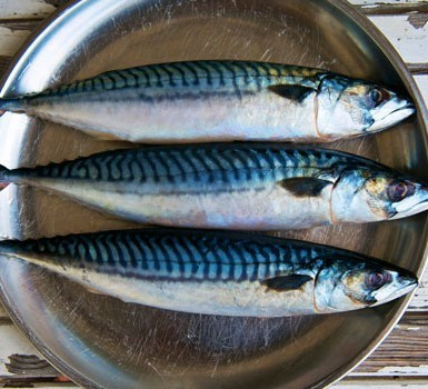 Fish farming business is great, get started