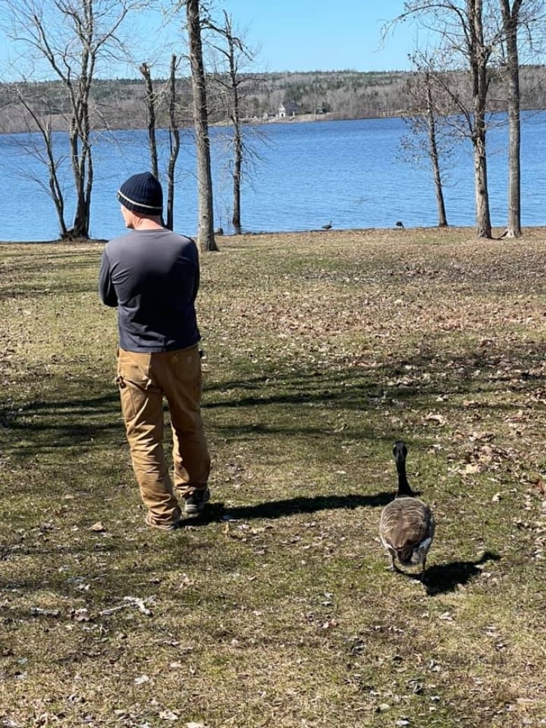 Meet Goosey Lucy, the bird that fell in love with a Hampton, N.B., man