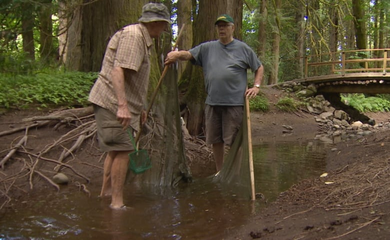 Extreme drought in southern B.C. taking devastating toll on life in water and on land
