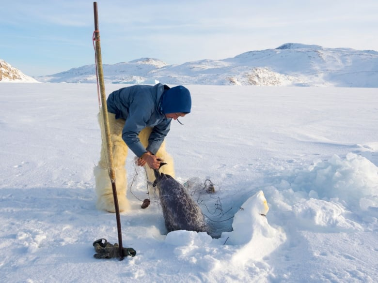 Climate change puts North Water Polynya, a source of Arctic life, in imminent danger