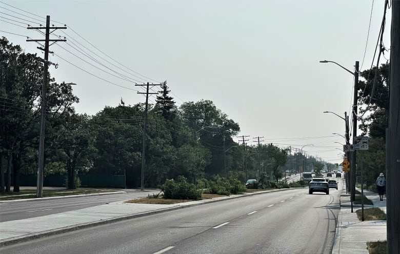 Man arrested, charged after trees on Winnipeg median cut down during house move