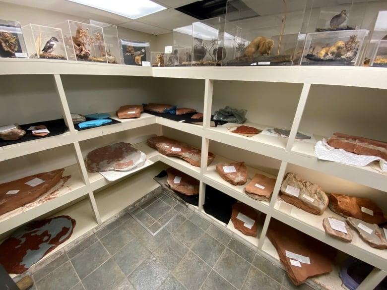 Take a walk through P.E.I.'s prehistoric past