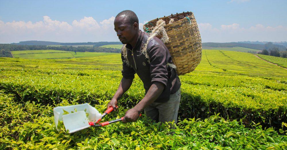 Buhari to NALDA: Establish 108 Integrated Farms